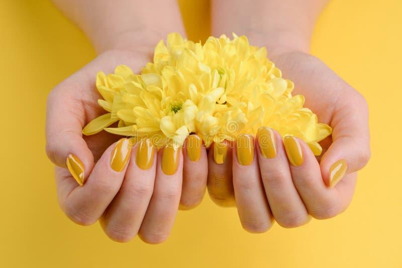 Цветки Gerbera в приданных форму чашки руках стоковое изображение