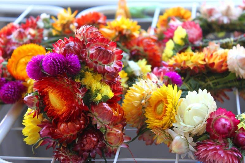 Цветки immortelle стоковые фото