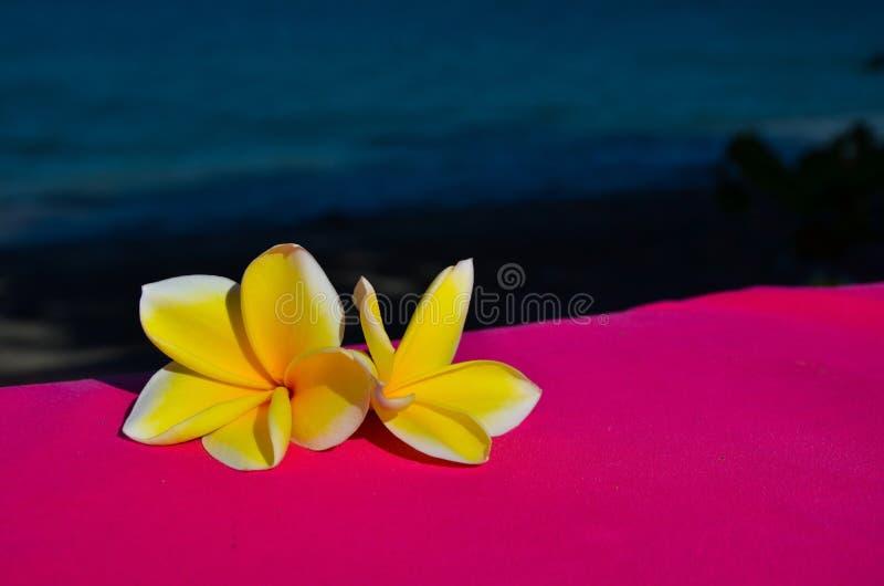Цветки Jasmin стоковые изображения rf