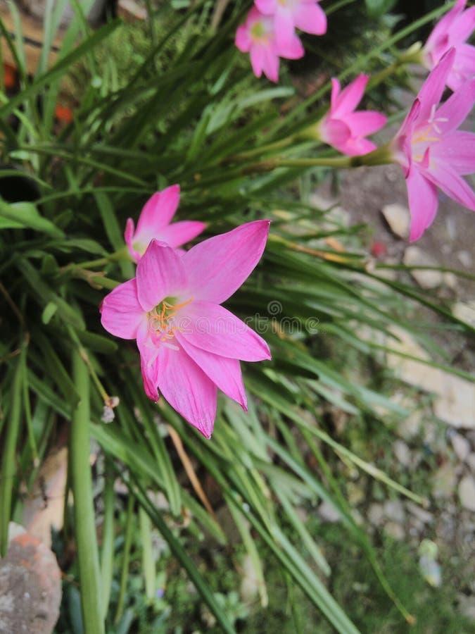 цветки lilly стоковое фото