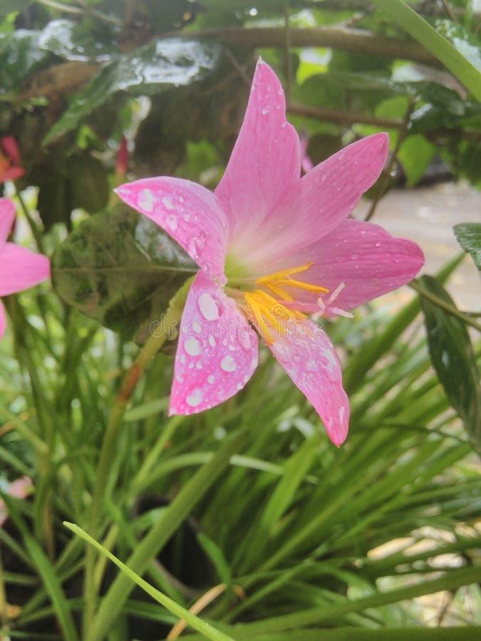 цветки lilly стоковая фотография