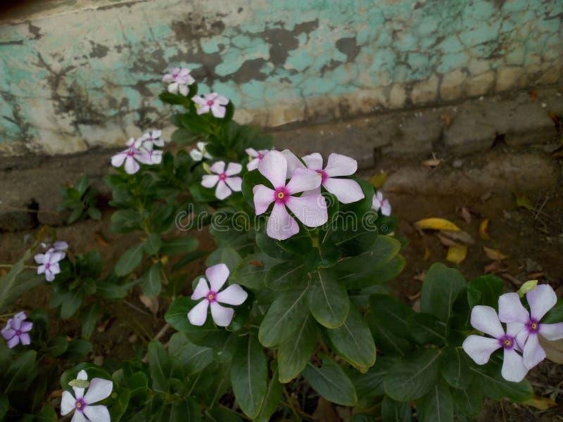 Цветки Parpal стоковое фото rf