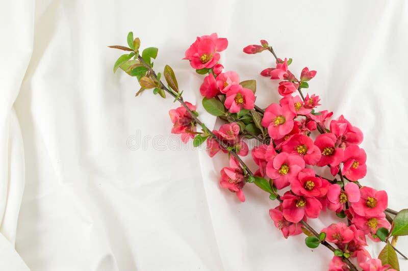 Цветки rugosa Розы на белой ткани стоковая фотография