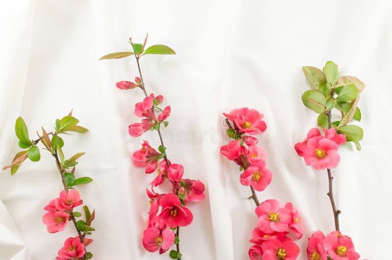 Цветки rugosa Розы на белой ткани стоковые изображения rf