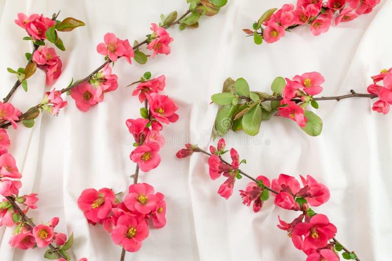 Цветки rugosa Розы на белой ткани стоковые изображения