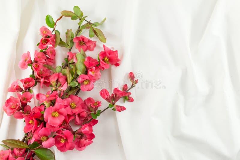Цветки rugosa Розы на белой ткани стоковое фото
