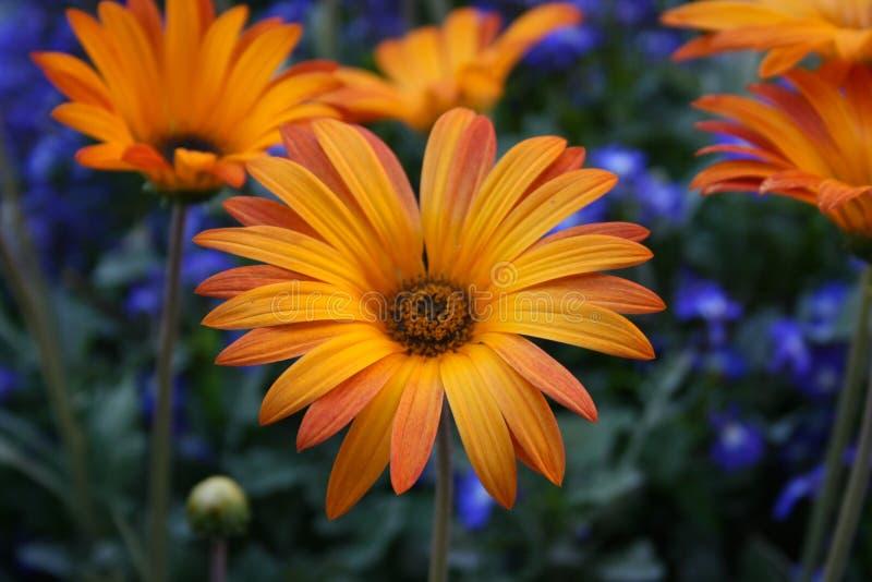 Цветки Sumertime стоковое фото rf