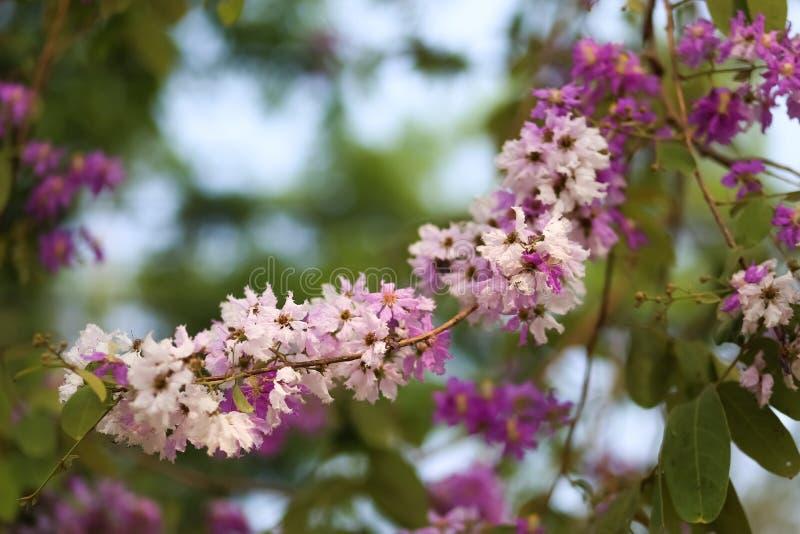 Цветки Tabak стоковое фото