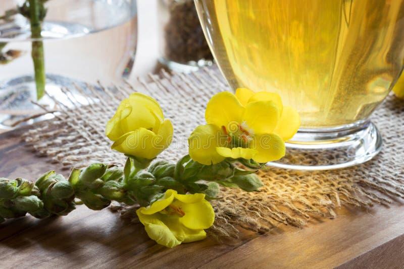 Цветки verbascum Mullein с чаем mullein на заднем плане стоковая фотография