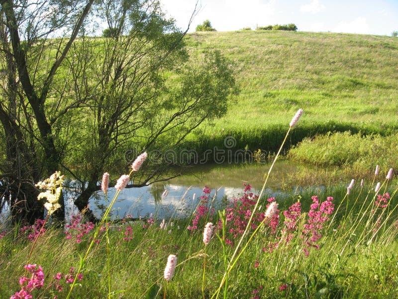 Цветки Wildflowers прудом стоковые фотографии rf