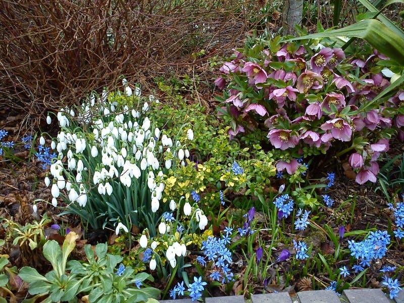 Цветки wintergarden в цветени стоковая фотография rf