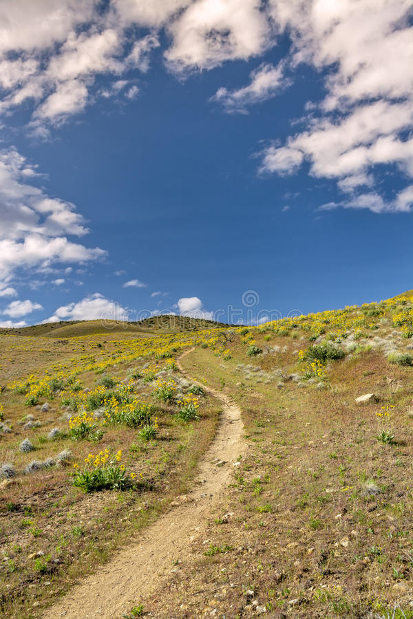 Download Цветки Yelow весны с следом Стоковое Изображение - изображение насчитывающей bluets, поле: 40588095