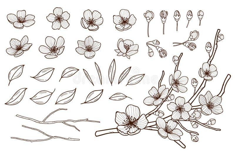 Цветков весны руки набор вычерченных цвести Цветки, бутоны, листья и ветви Сакуры изолированные на белой предпосылке Вишня иллюстрация штока