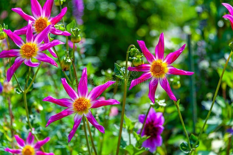 8 цветков формы звезды лепестка в поле стоковое фото rf