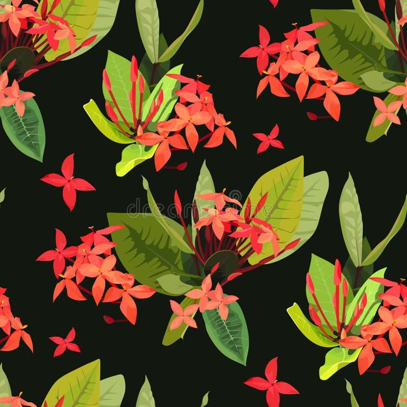 Цветков flowersIxora Ixora предпосылка ботаники картины тропических тропических безшовная иллюстрация вектора