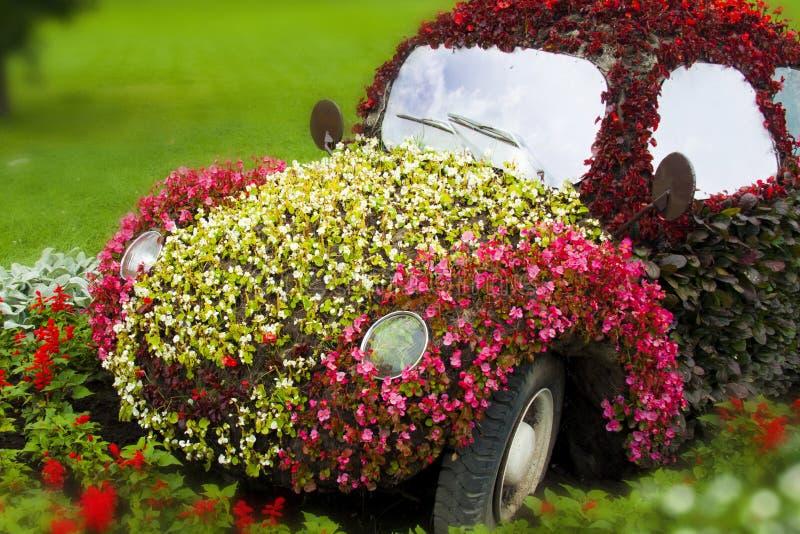 Цветк-автомобиль стоковые фото