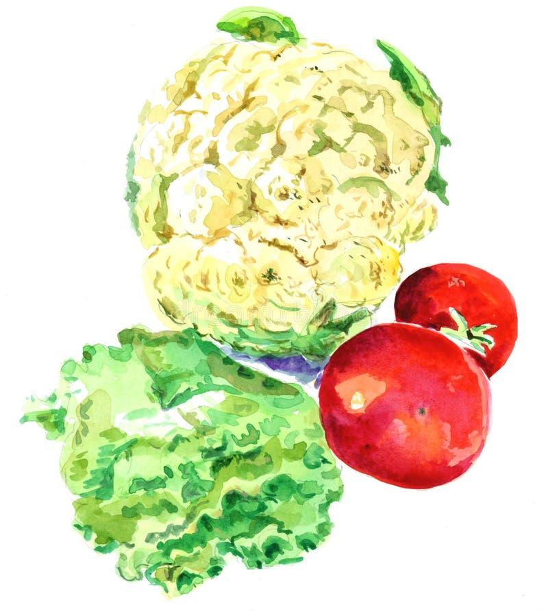Цветная капуста и томаты акварели : стоковые изображения
