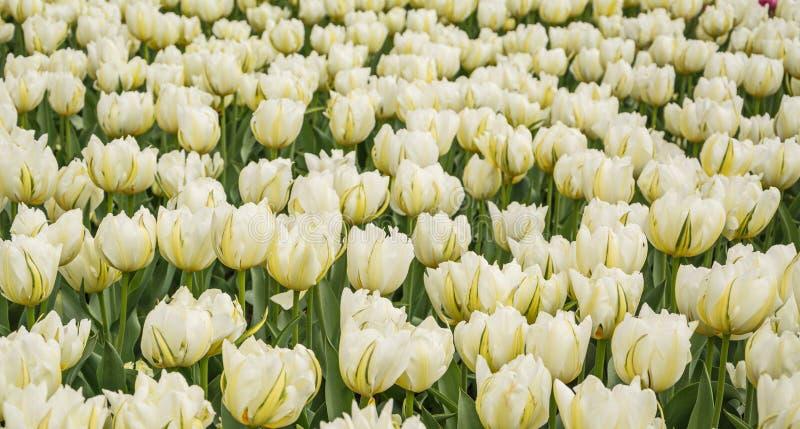 Цветник в саде стоковое изображение