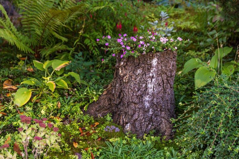 Цветник задворк Fronyard в крупном плане пня дерева стоковые изображения