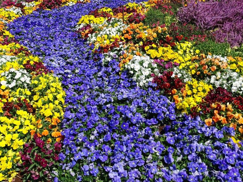 Цветник показывая пропуская поток в ботанические сады стоковые фото