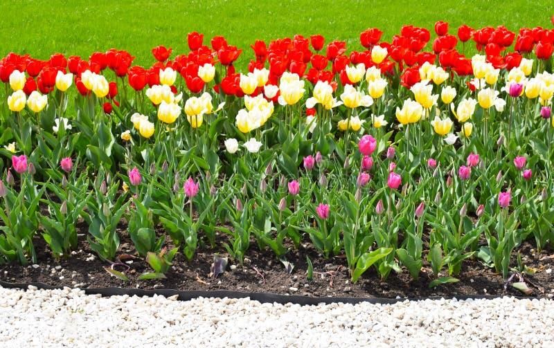 Цветник с красочными тюльпанами стоковые изображения
