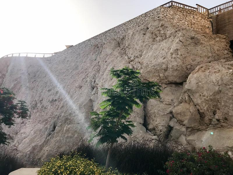 Цветник с малым зеленым деревом и желтые цветки на предпосылке каменной стены на горных склонах в курорте моря тропическом стоковые изображения