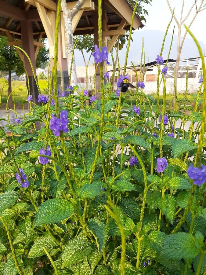 цветной сад стоковое фото rf