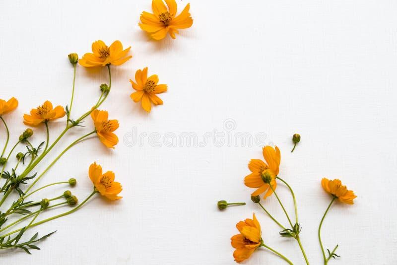 цветные оранжевые цветы космос местная флора азии схемы плоский стиль открытки стоковое изображение rf