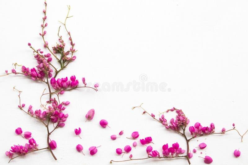 цветные розовые маленькие цветы антигон лептопус, местный флора расположение плоский стиль открытки стоковое фото