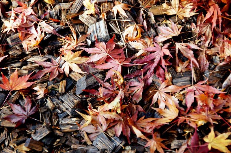 9 цветов осени стоковое фото rf