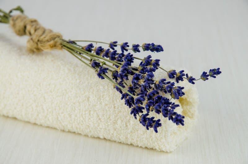Цветок лаванды стоковые изображения rf