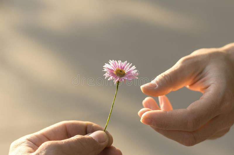 цветок дает руку стоковое фото
