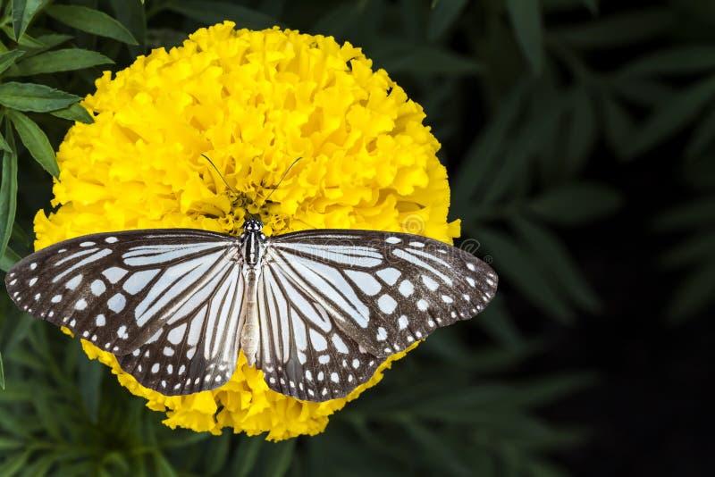 Цветок бабочки и ноготков стоковые фото