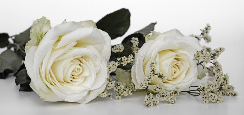 Цветок, белая, розовая, розовая семья