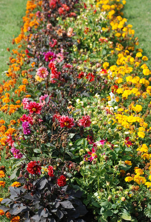 цветок Венгрия дисплея keszthely стоковое фото