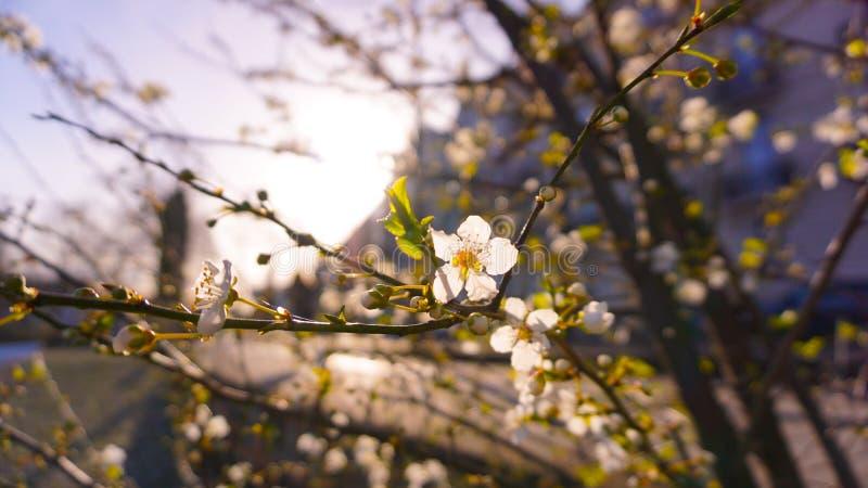 Цветок весной стоковое изображение