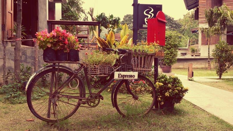 Цветок велосипеда стоковое изображение rf