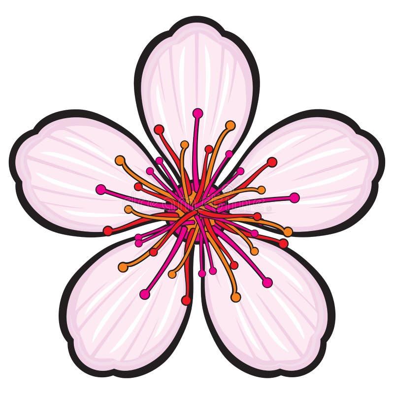 Цветы сакура картинки для вырезания