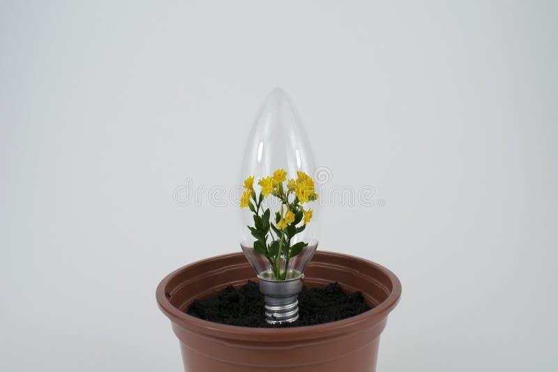 Цветок внутри электрической лампочки стоковые изображения rf
