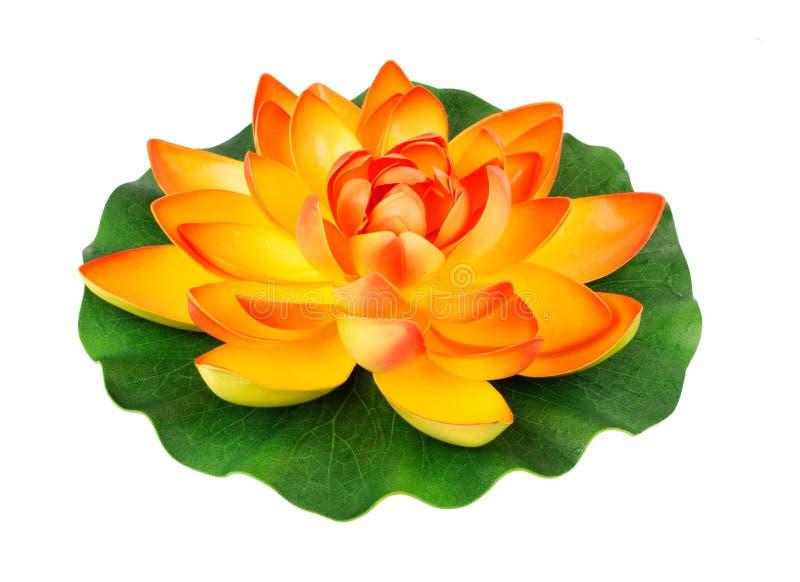 Цветок воды стоковое фото rf