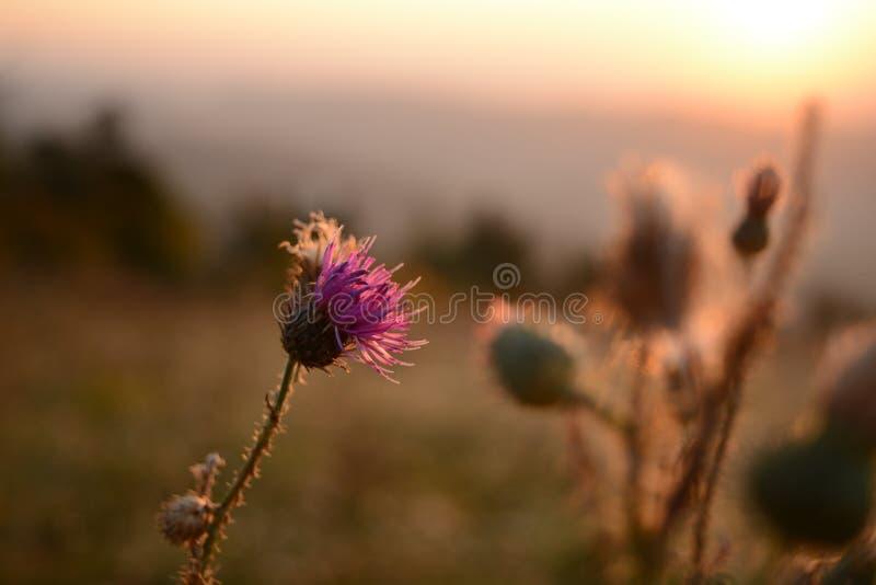 Цветок в восходе солнца стоковое изображение