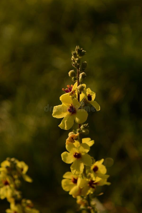 Цветок в восходе солнца стоковая фотография rf