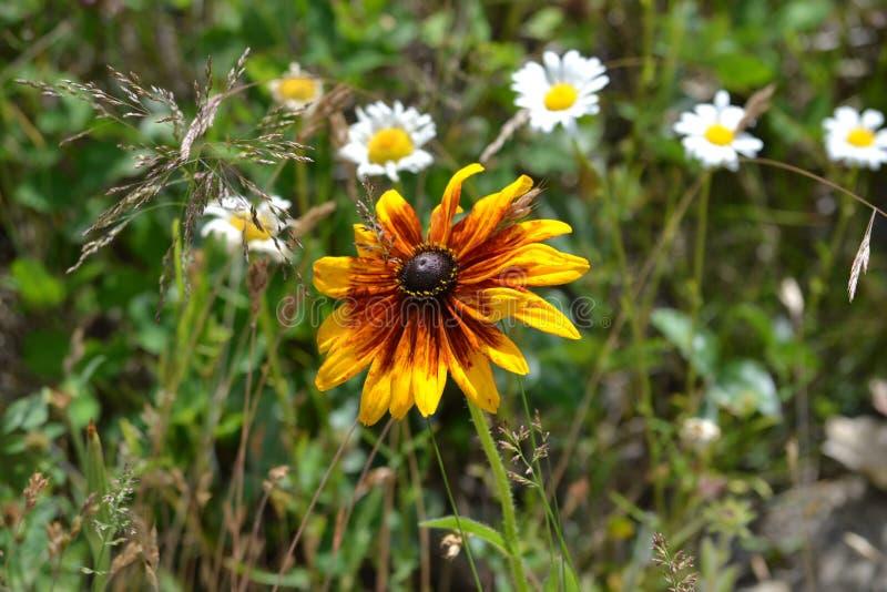 Цветок в диком стоковые изображения rf