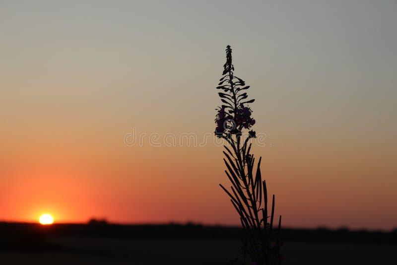 Цветок в заходе солнца стоковые фотографии rf
