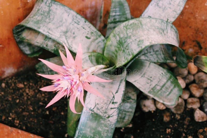 Цветок в Коста-Рика стоковое фото rf