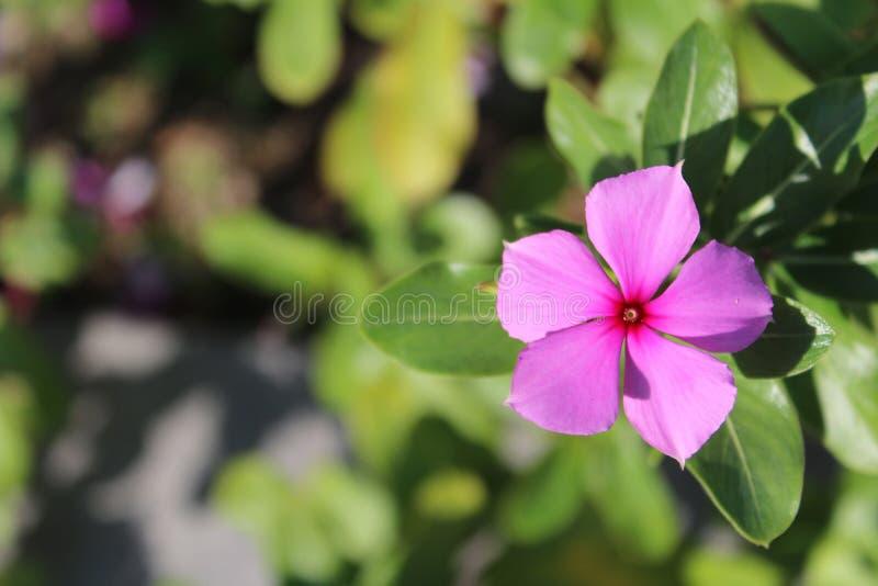 Цветок в парке стоковая фотография