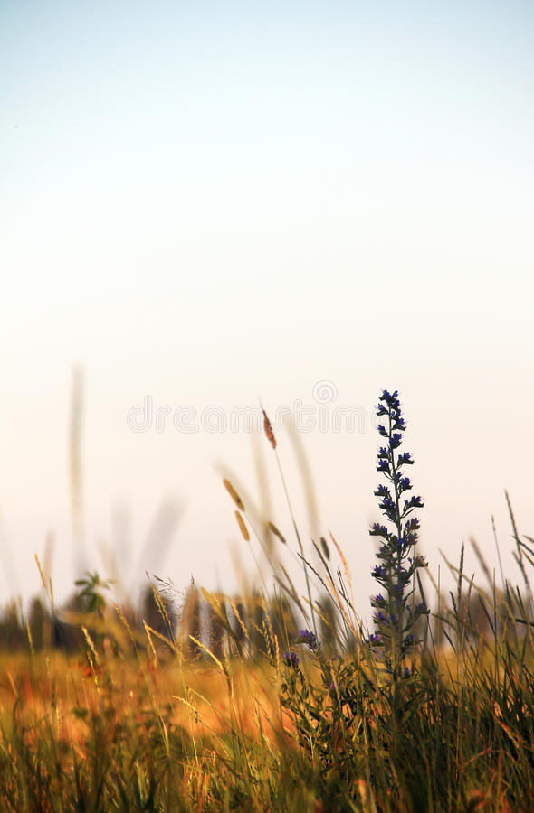 Цветок в поле стоковое фото
