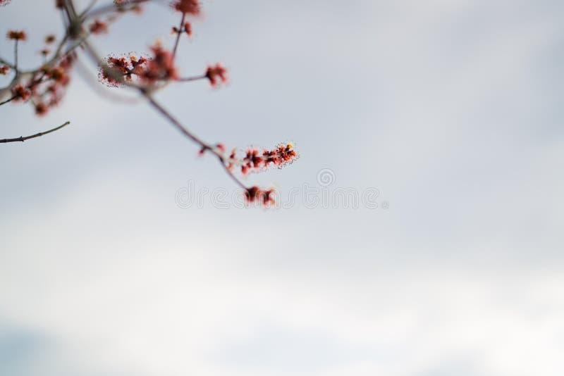 Download Цветок в предыдущей весне стоковое фото. изображение насчитывающей бобра - 81801578