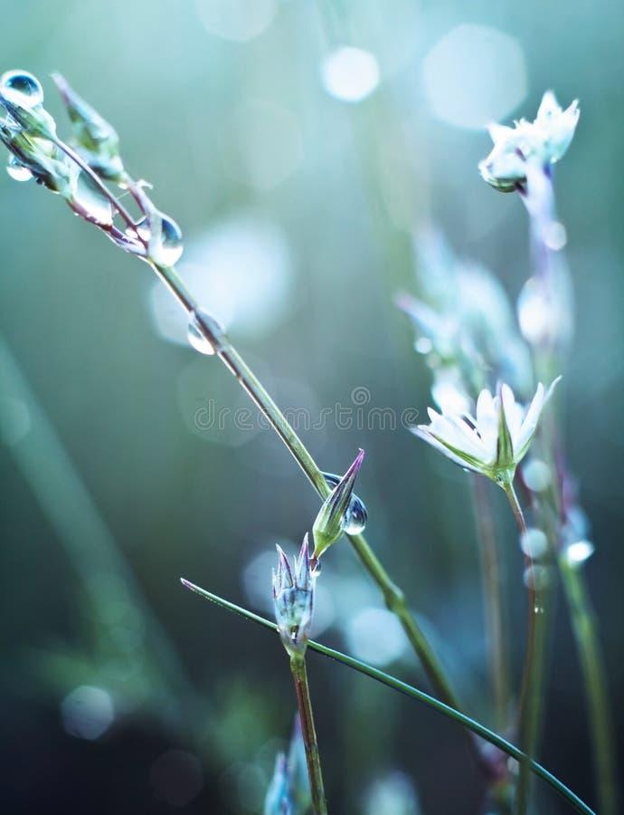 Download Цветок в росе стоковое фото. изображение насчитывающей ботаническую - 40581826