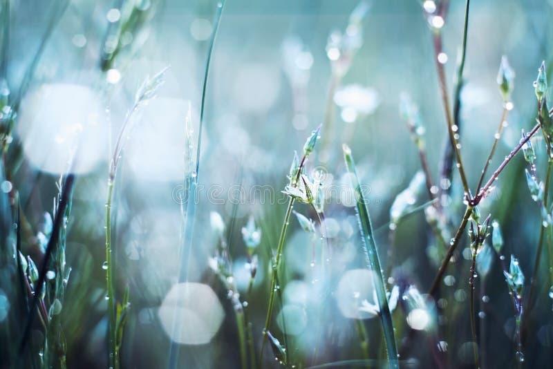 Download Цветок в росе стоковое фото. изображение насчитывающей яркое - 40581828